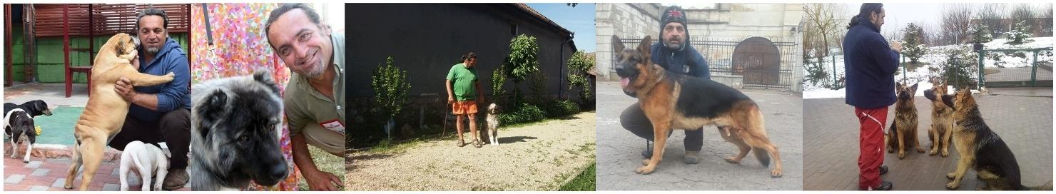 dresaj canin pensiune canina oradea